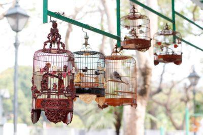 Yuen Po Street Bird Garden - Hong Kong Walking Tours - Big Foot Tour