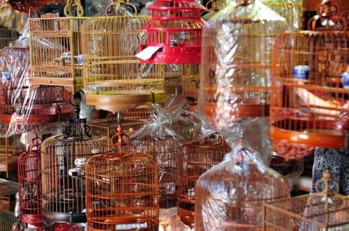 hong kong markets yuen-po-street-bird-market